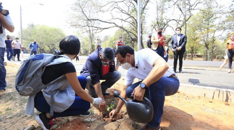 Ciclovía Central estará adornada con 400 plantas de tajy