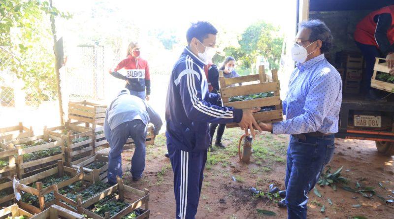 """OCHO MIL PLANTINES DE FRUTILLA. Cuatro mil plantines de tres variedades de frutillas entregamos al Comité """"San Isidro Labrador"""" de la ciudad de Guarambaré"""