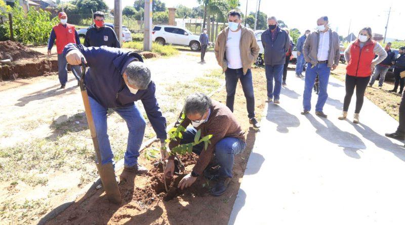 CEDROS Y LAPACHOS. Un total de cien arbolitos, entre cedros y lapachos, entregamos a la ciudad de Guarambaré a pedido del intendente José Asunción Vallejos